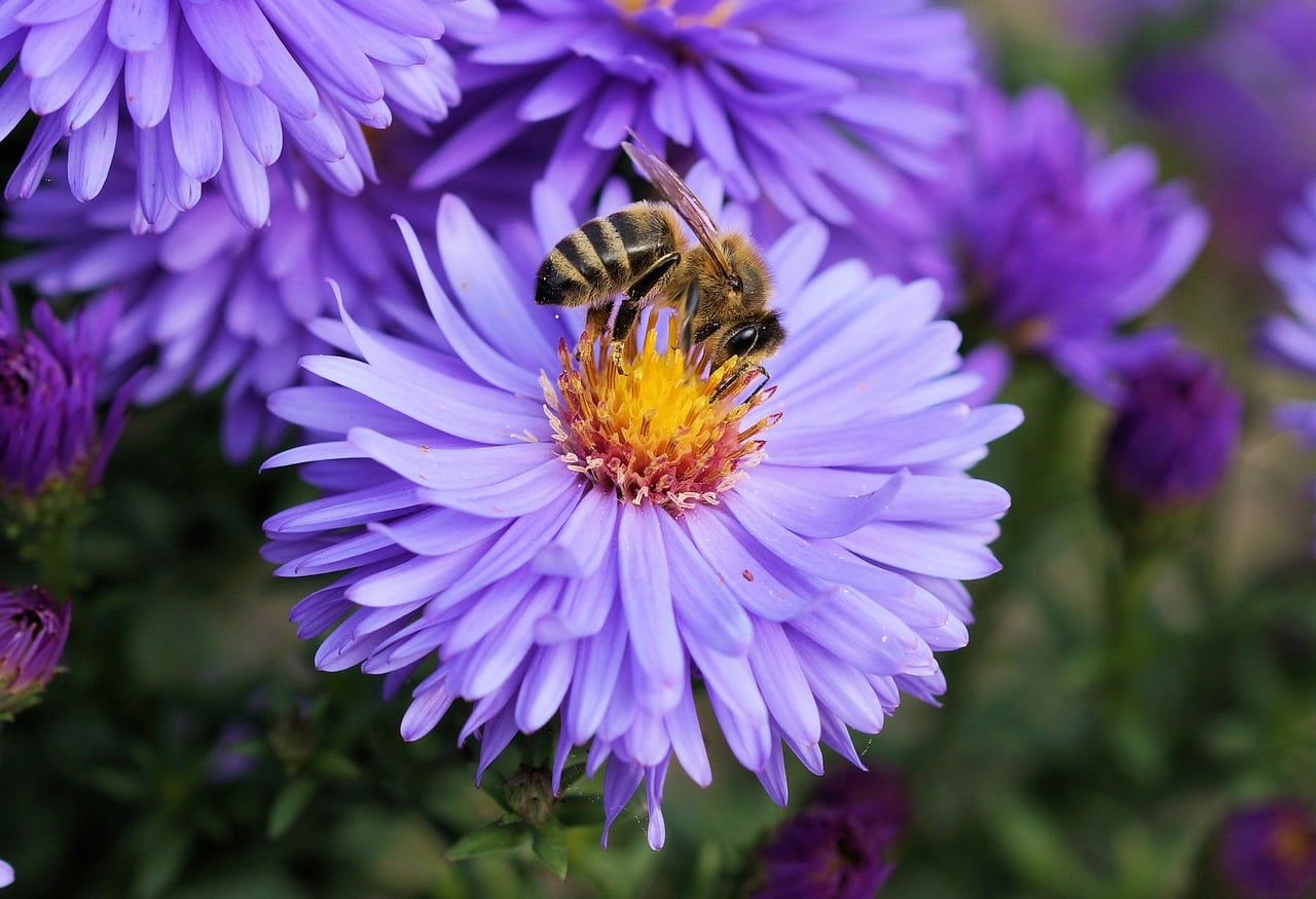 Polo Club Buzzing With Resident Honey Bees